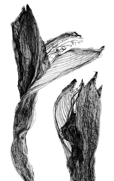 daylilies-01.jpg