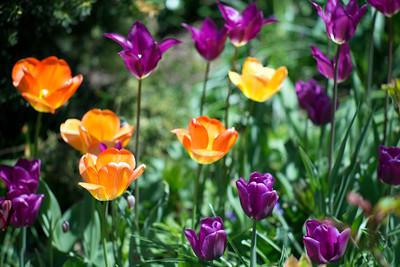 Spring Color 2014