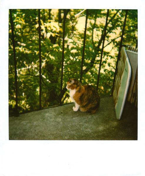 Polaroid_0079-XL.jpg