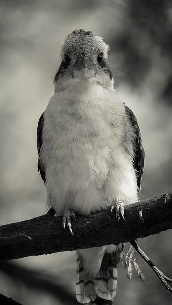 012019  bird  _2.JPG
