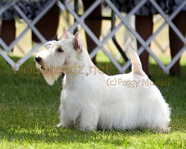 Great Western Terrier Association - June 2013 (Saturday)