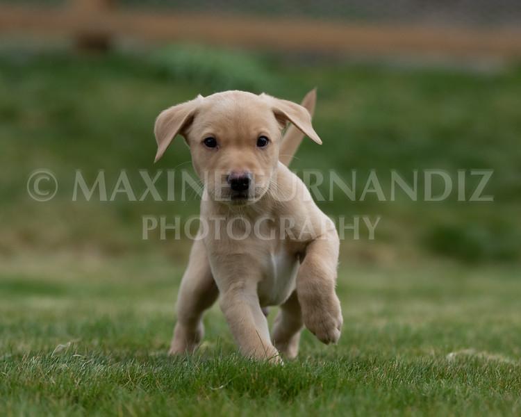 Weika Puppies 24 March 2019-6632.jpg