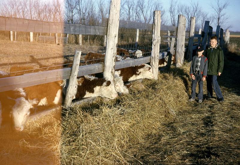 ARS066.  Doug Burgum, unknown‡ – cattle - 1964‡.jpg