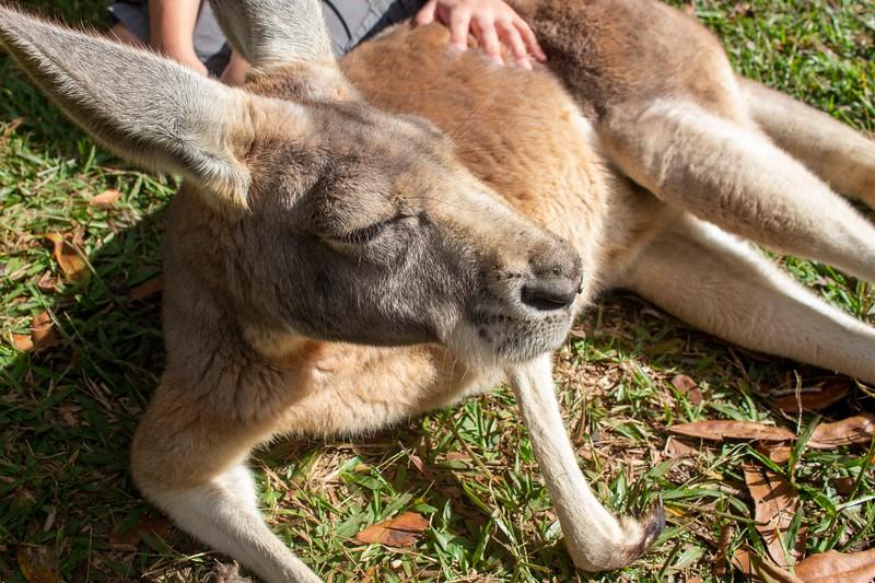 Australia_283.jpg