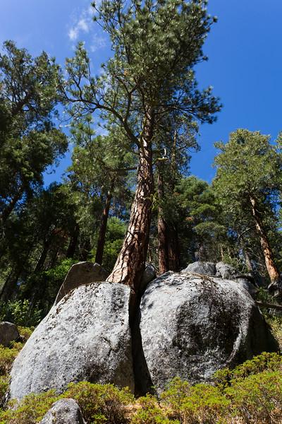Sequoia_0356.jpg