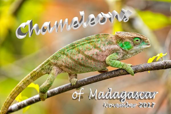 Chameleons of Madagascar