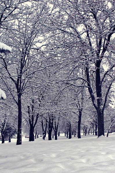 White Christmas Eve Eve....