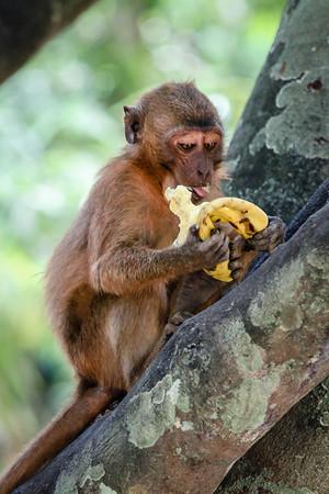 Monkey Cave & James Bond Island (Phuket)