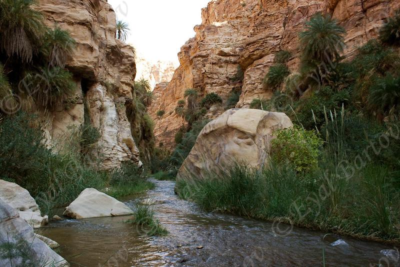 IMG_4853 Zered wadi- Jordan.jpg