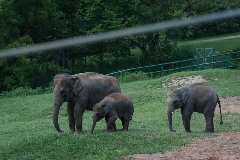 Syracuse Zoo August 2020-12.jpg