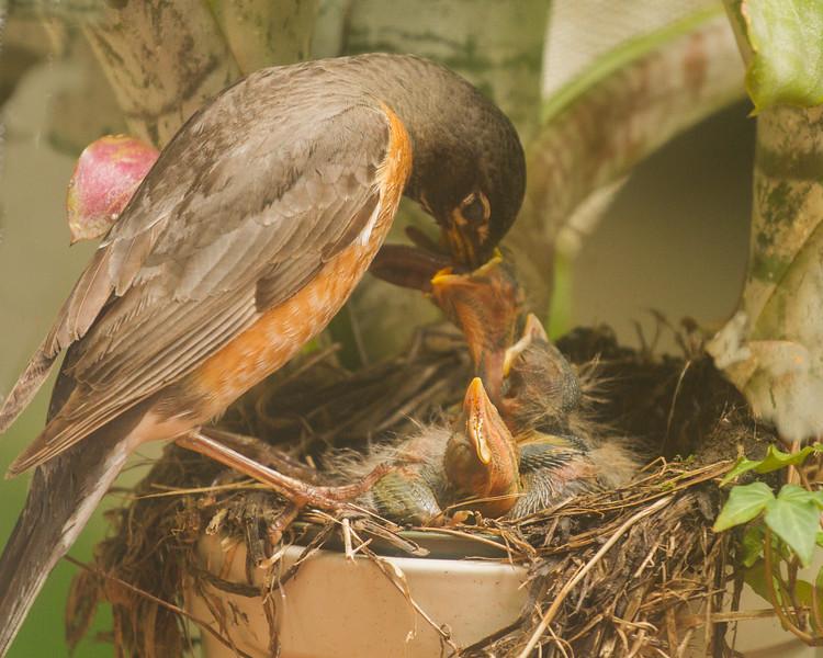 Feeding time-2 copy.JPG