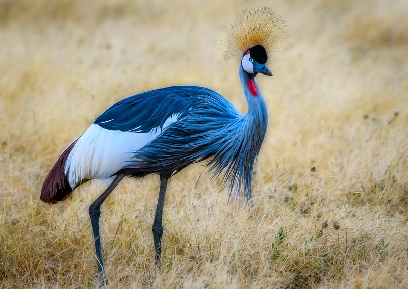 Tanzania Safari (130 of 143)-Edit.jpg