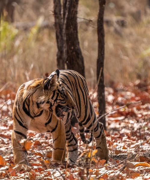 India_April_2019-2423.jpg