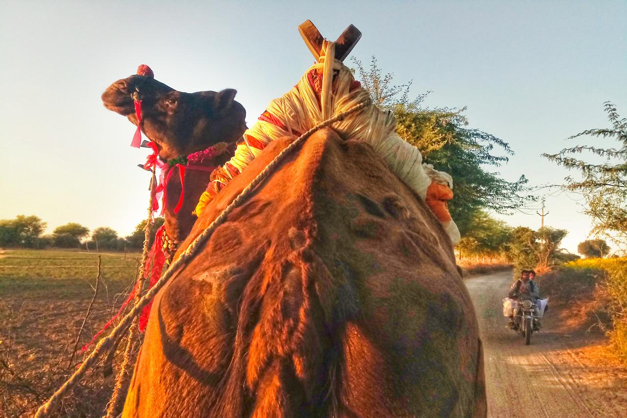 """Camel"