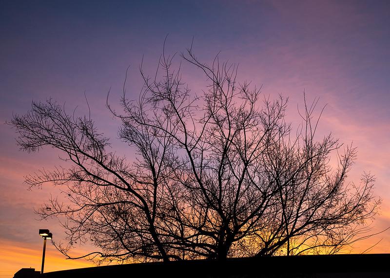 morning tree.jpg