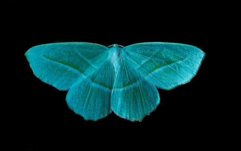 Butterfly 36.jpg