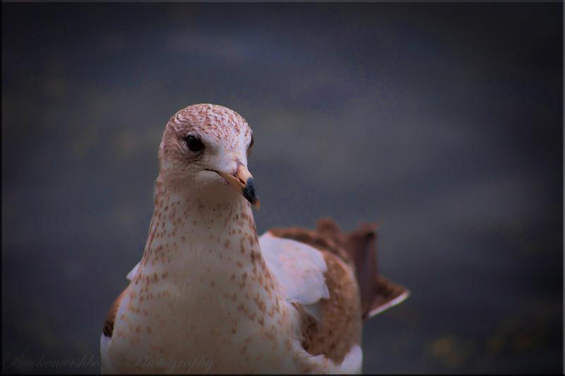 birds_8.JPG