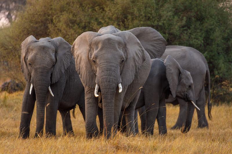 Botswana_0818_PSokol-684.jpg