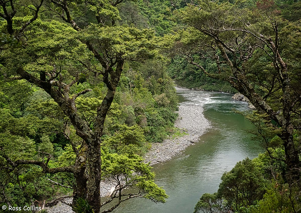 Waiohine Gorge 2020