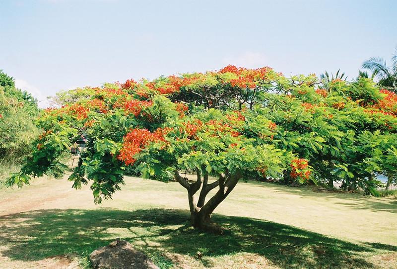 Hawaii-123.jpg