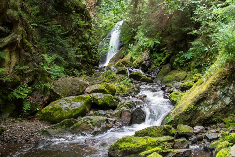 Black Forest (6).jpg
