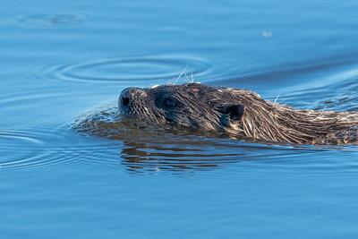 2021_6_14 Otters part 4