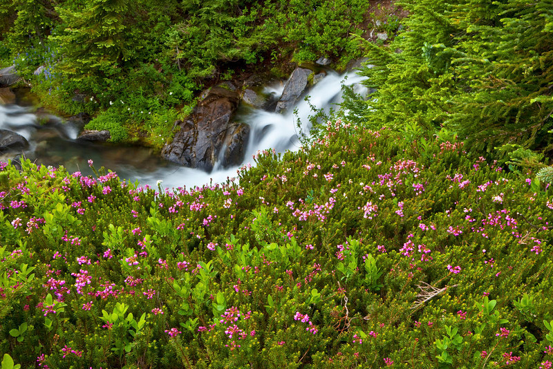 Pink flowers with stream cascade, Mt Rainier, Washington