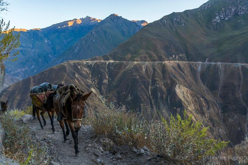 Colca Canyon-1330.jpg