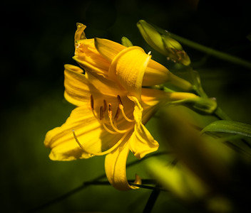 Spring Flowers 2015