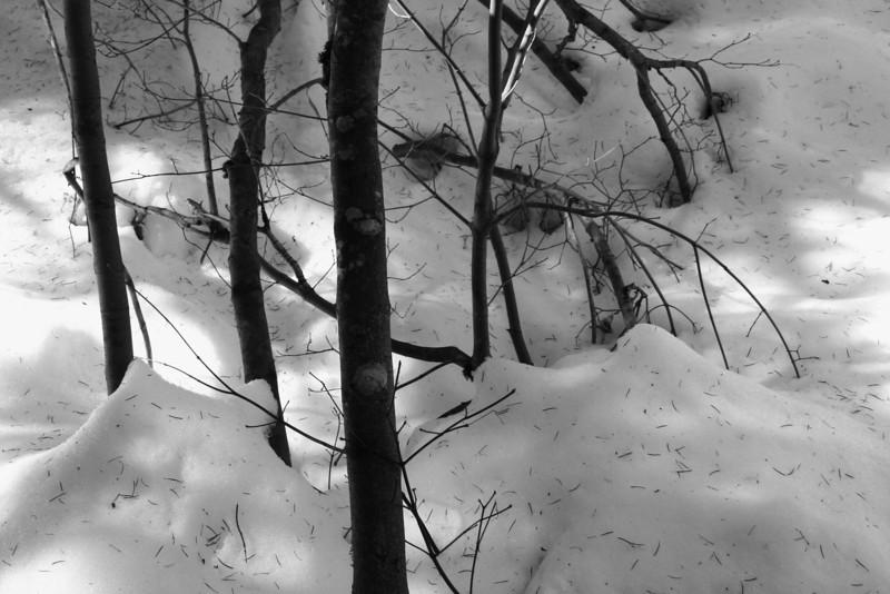 060210-067BW (Trunks, Branches, Snow).jpg