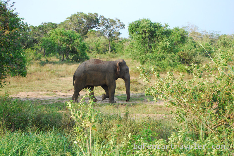 elephant in Habarana Eco Park (2).jpg