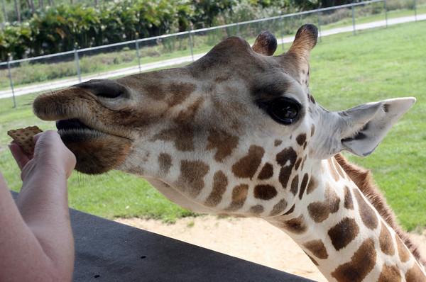 Visit to Lion Country Safari