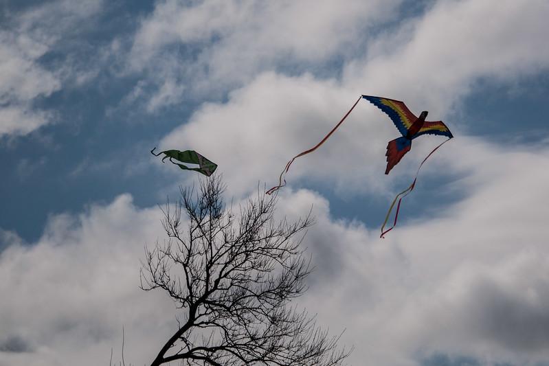 Blossom Kite Festival (2017)-21.jpg