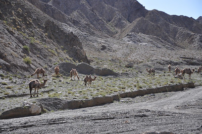 """Dinosaurs Along The Silk Road"" -- Sinofossa 2009 14: Changma Day 2"