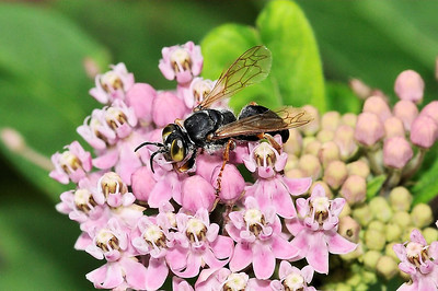Bees and insects that buzz.