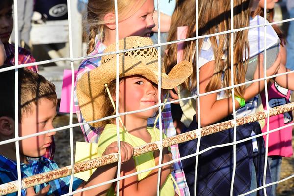 Carey Kids Rodeo