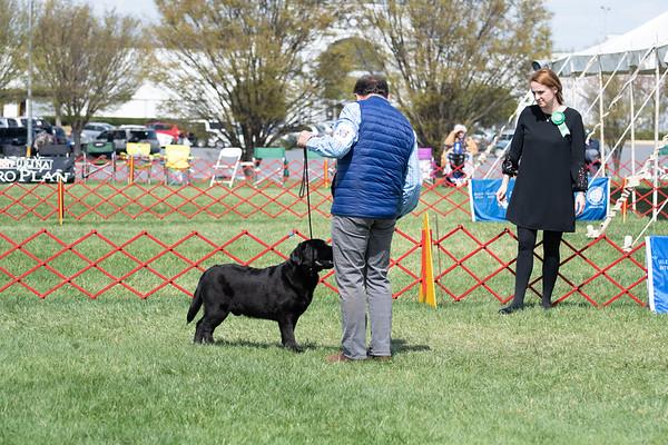 Labrador Retriever Club of the Potomac 2019 Spring Specialty