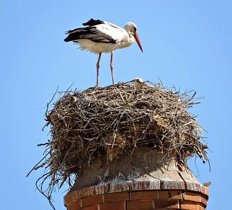 Portugal_04.2015_White Storks