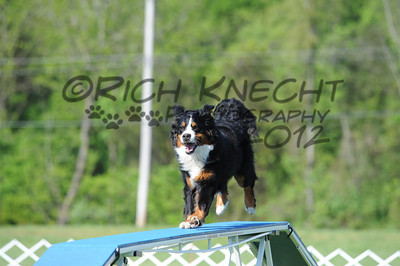 Bernese Mountain Dog National Specialty AKC Trial May 11