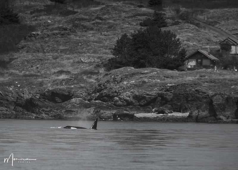 2019-08-31 - Whale Watching-1005_edit.jpg