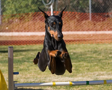 PDT Jumpers Round 1 Levels 1/2 - 24 inch