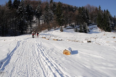 2011-01-29 Kraliky Pata bezky