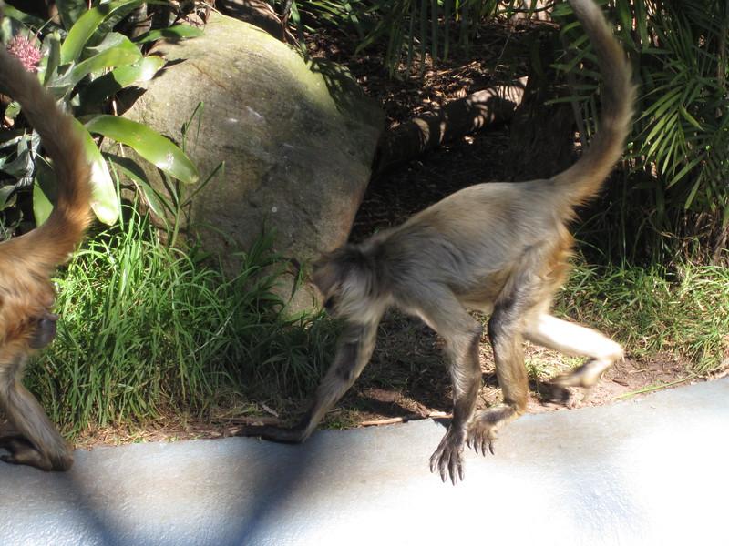 Sydney - Sydeny Zoo-65.JPG