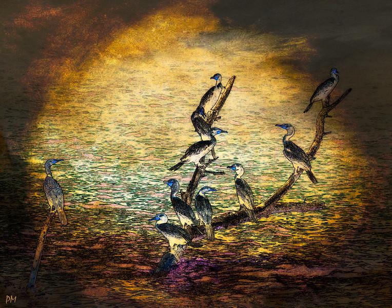 Artistic Cormorants