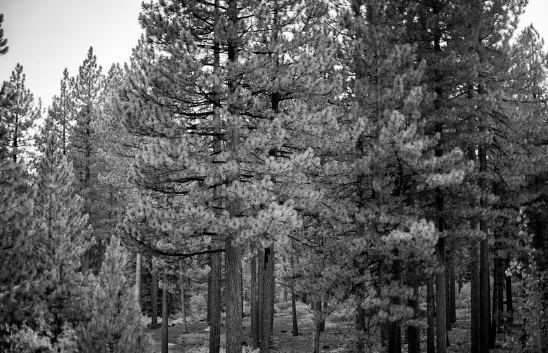 tahoe_1064.jpg