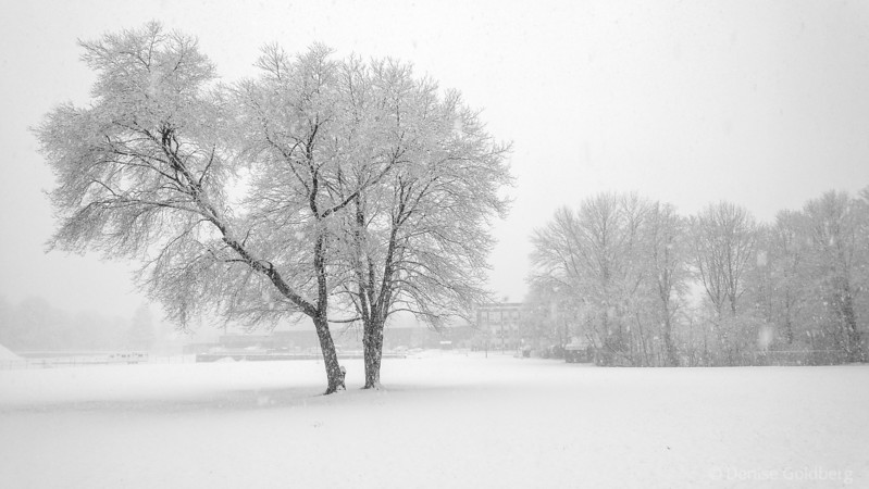 coated, as heavy snow is falling