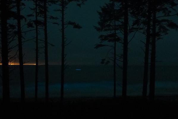 Olympic Peninsula Bioluminescence