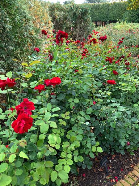 Chicago Botanic Garden 121.jpg