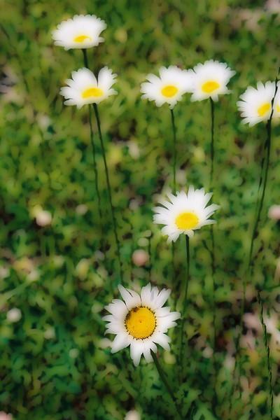 wildflower changed.jpg