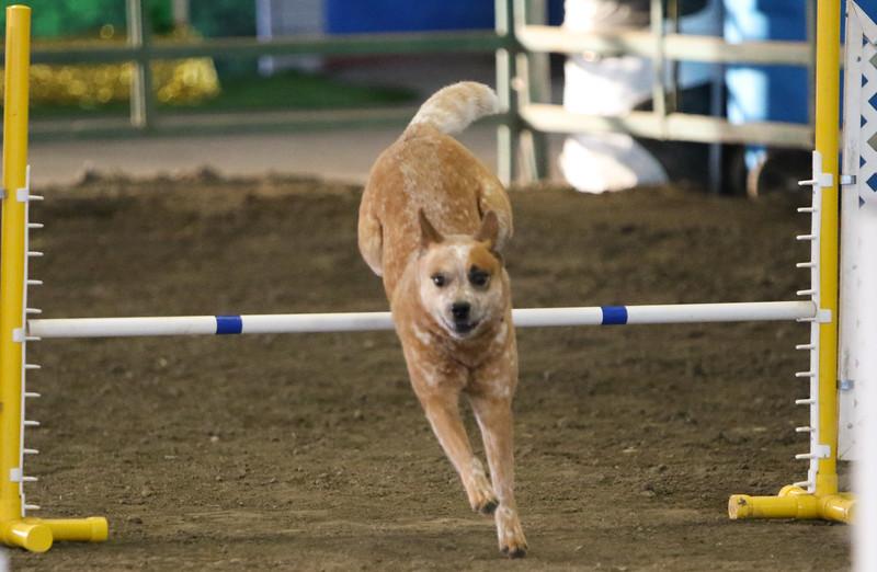3-10-2019 Bloodhound-9115.jpg